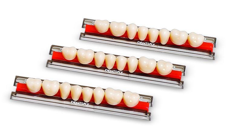 Dente Biotone IPN - modelos posteriores - Escala Vita