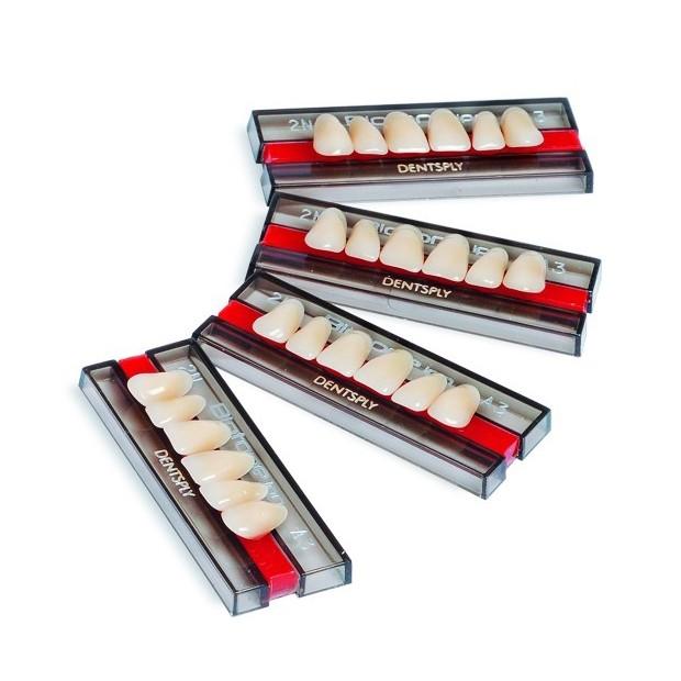 Dente Biotone IPN - modelos anteriores - Escala Vita