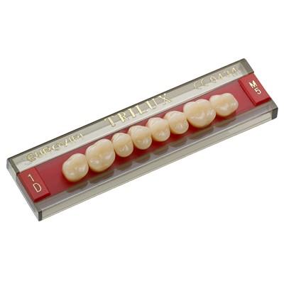 Dente Trilux - modelos posteriores
