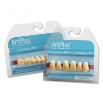 Dente ArtiPlus - modelos posteriores
