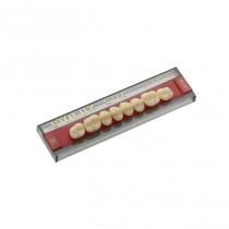 Dente Biolux OMC Vipi - Modelos Posteriores