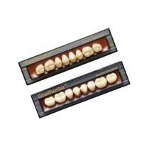 Dente Ivostar - Modelos Posteriores - D80 I A2